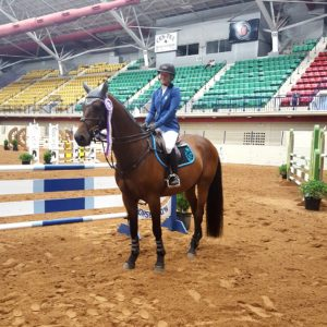Czech import warmblood show jumper