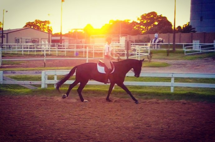 hunter/jumper, hanoverian, equestrian style