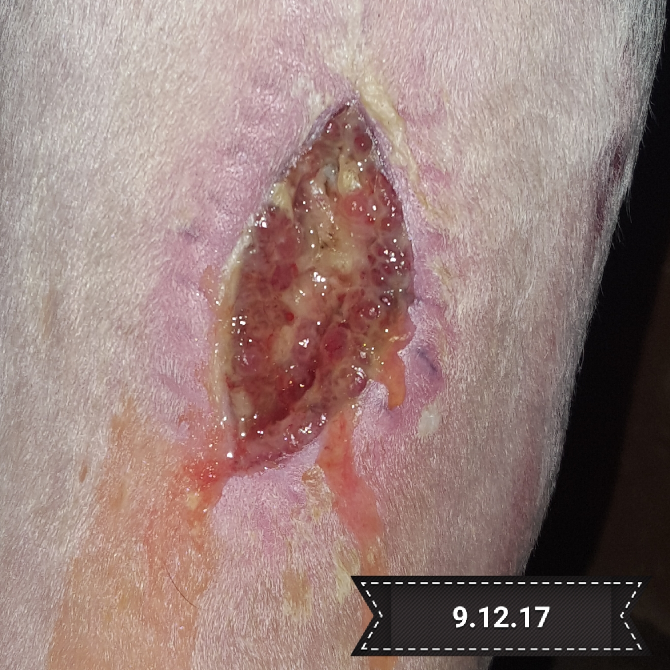 equine wound care