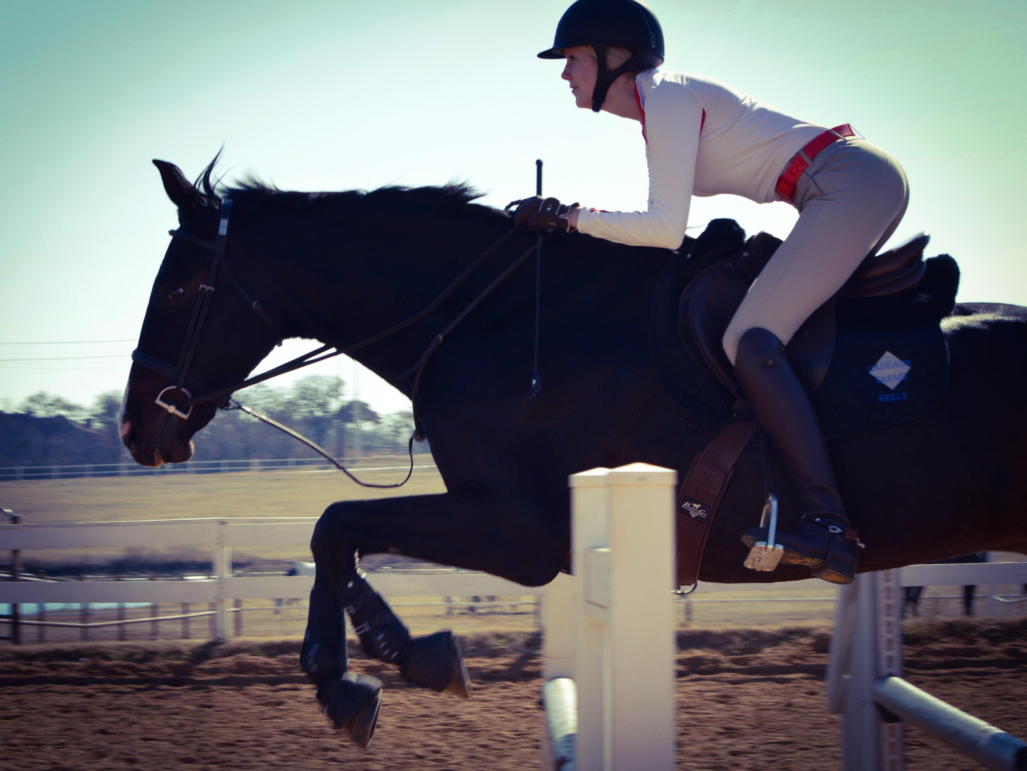 jump lesson, hunky hanoverian