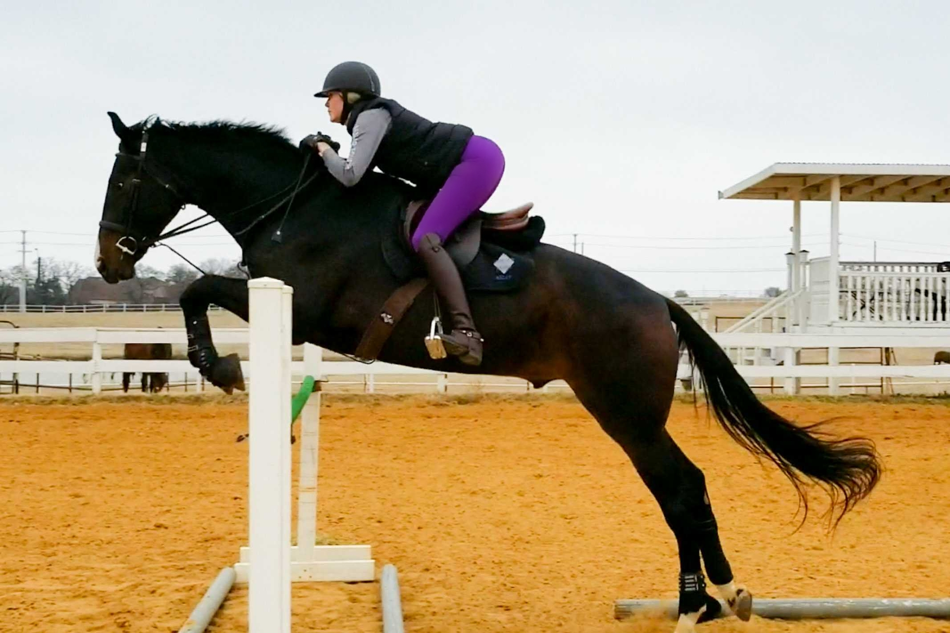 purple breeches, Hunky Hanoverian
