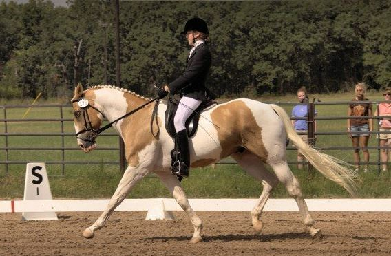 palomino paint dressage horse
