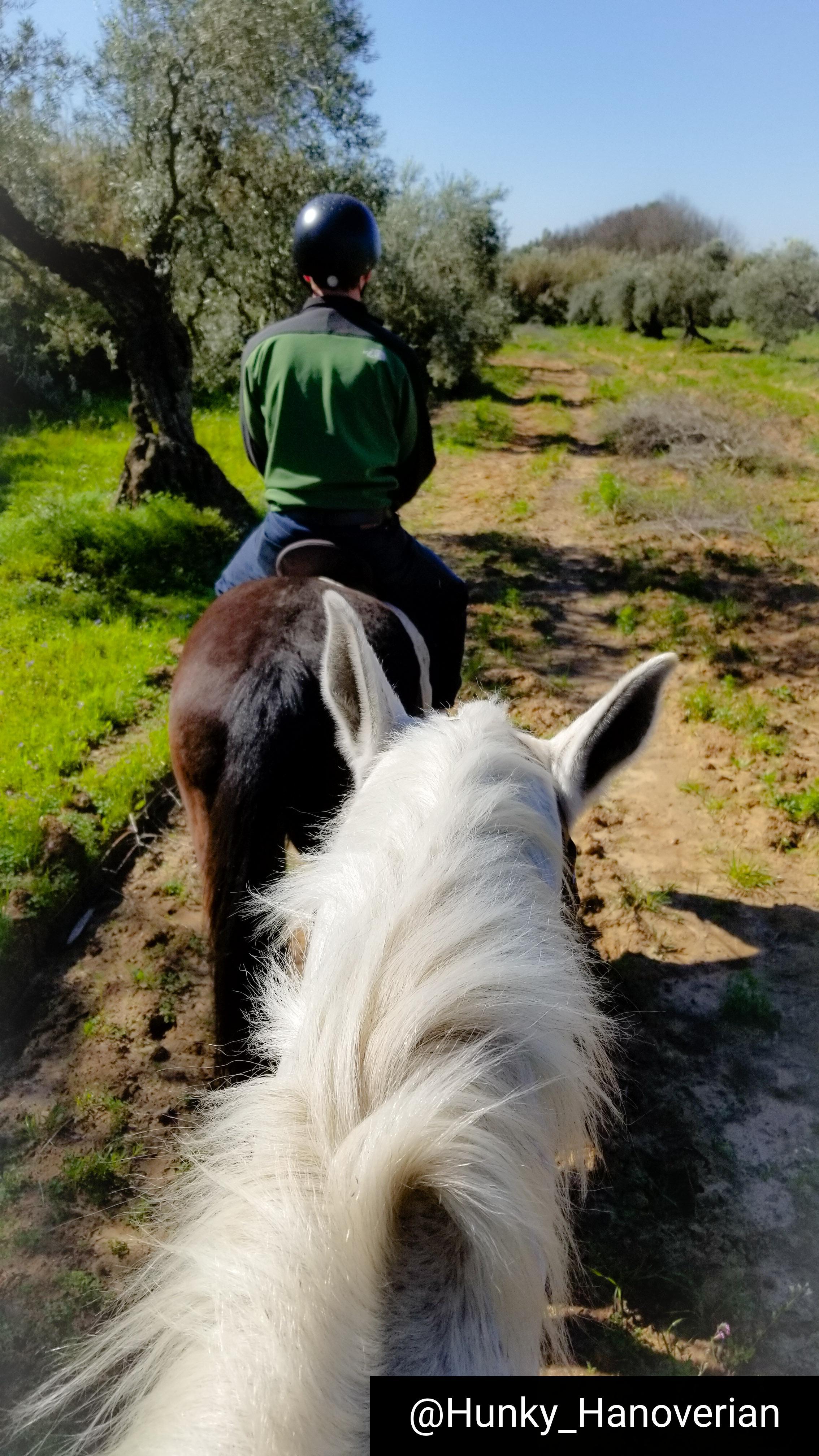 riding spanish horses