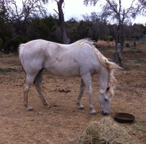 equine euthanasia