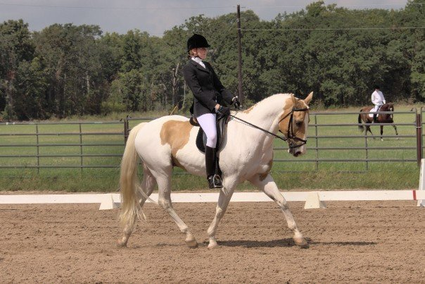 palomino paint, dressage