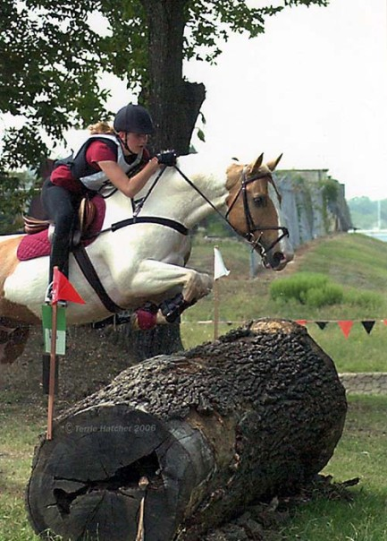 palomino paint, cross country, eventing