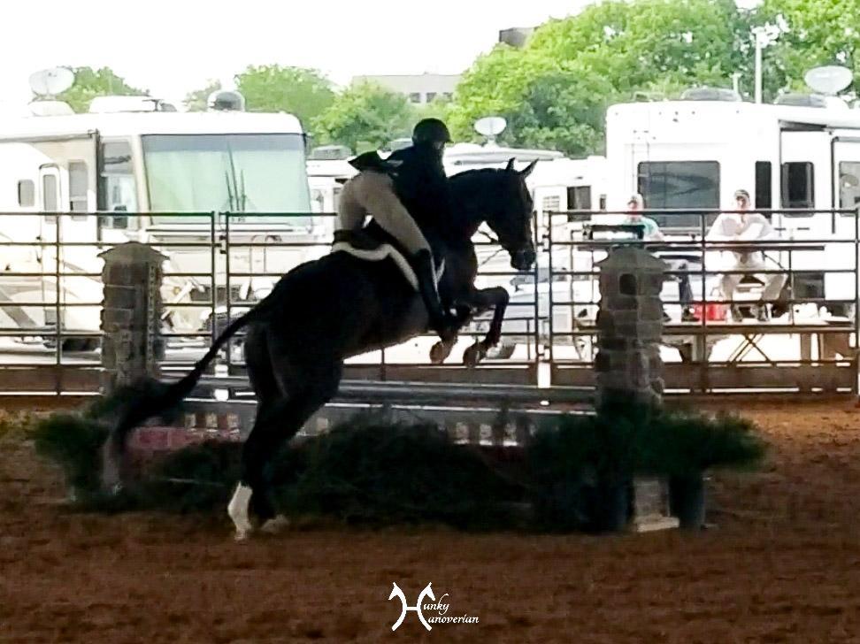 Ft. Worth Hunter Jumper Show Hunky Hanoverian