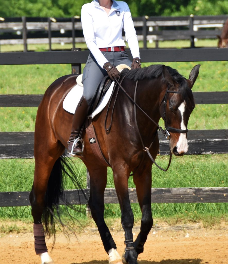 stevie equestrian breeches review